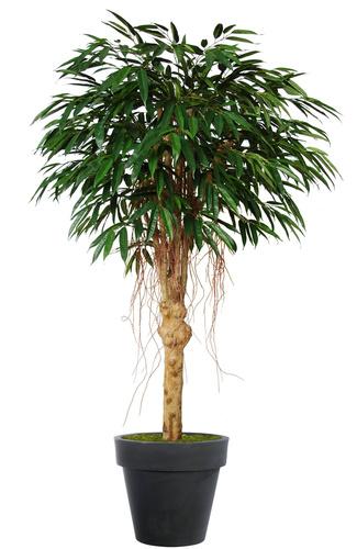 Longifolia Riviera 200 cm Green